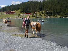 Christoph and cow